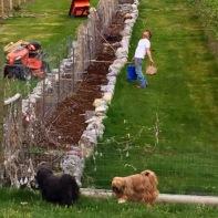 Dan prepares the vineyard, vegetable bed for 2016