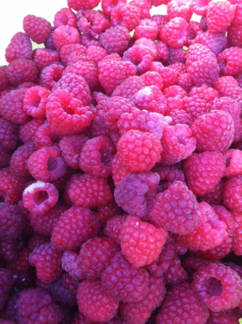 Raspberries are fabulous this July!