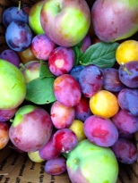 A special season for our premium apples, plums, pears.